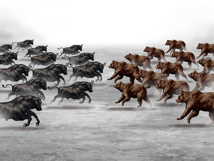 Stock market trend business concept and financial prediction uncertainty symbol as a heard of bulls and bears running towards each other to set the direction of an economic forecast.